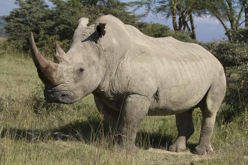 Defending Rhinos